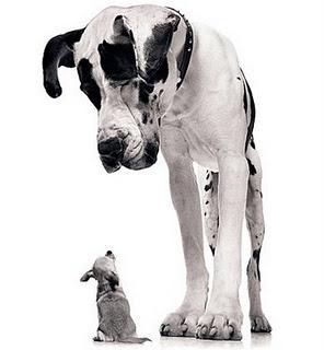 bigdog